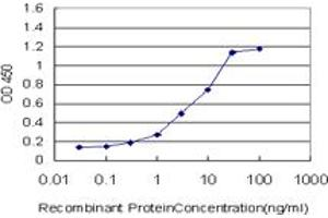 Image no. 2 for anti-Signal Transducer and Activator of Transcription 5B (STAT5B) (AA 1-390) antibody (ABIN520547)