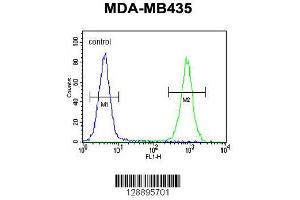 Image no. 1 for anti-Calmodulin Regulated Spectrin Associated Protein 1 (CAMSAP1) (AA 34-62), (N-Term) antibody (ABIN655218)