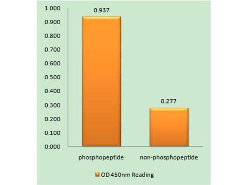 ELISA image for anti-Amyloid beta (A4) Precursor-Like Protein 2 (APLP2) (pTyr755) antibody (ABIN1847734)