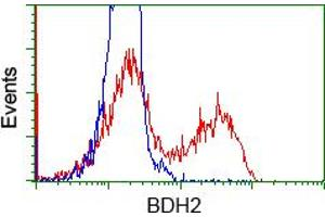 Image no. 3 for anti-3-hydroxybutyrate Dehydrogenase, Type 2 (BDH2) antibody (ABIN1496856)