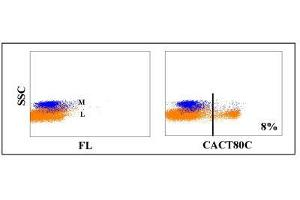 Flow Cytometry (FACS) image for anti-CD8a Molecule (CD8A) antibody (ABIN5604417)