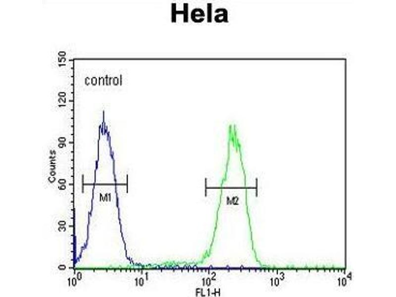 Flow Cytometry (FACS) image for anti-Ubiquitin A-52 Residue Ribosomal Protein Fusion Product 1 (UBA52) (AA 107-136), (C-Term) antibody (ABIN955419)