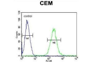 Image no. 1 for anti-Zinc Finger Protein 667 (ZNF667) (AA 310-340), (Middle Region) antibody (ABIN955725)