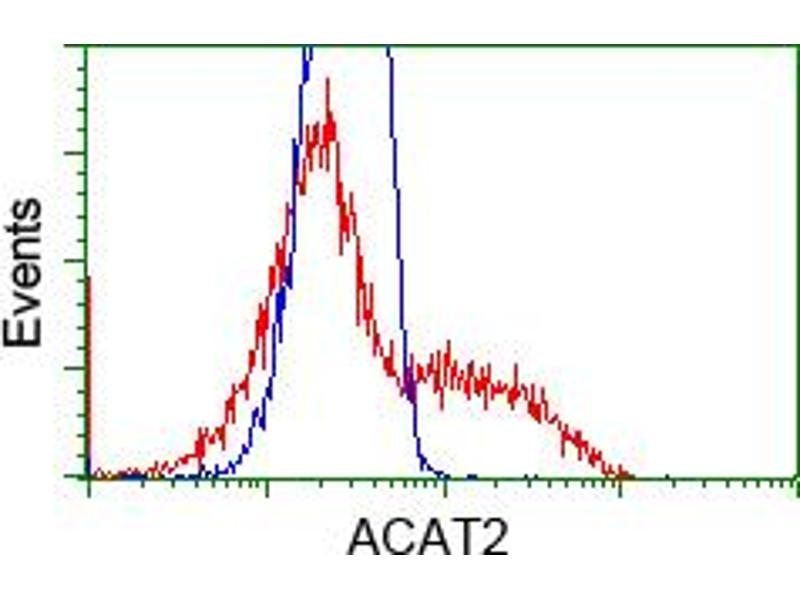 Image no. 4 for anti-Acetyl-CoA Acetyltransferase 2 (ACAT2) antibody (ABIN1496398)