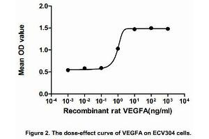 Image no. 1 for Vascular Endothelial Growth Factor A (VEGFA) (AA 27-190) (Active) protein (His tag) (ABIN6239764)