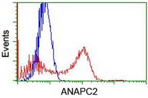 Image no. 7 for anti-Anaphase Promoting Complex Subunit 2 (ANAPC2) antibody (ABIN1496634)