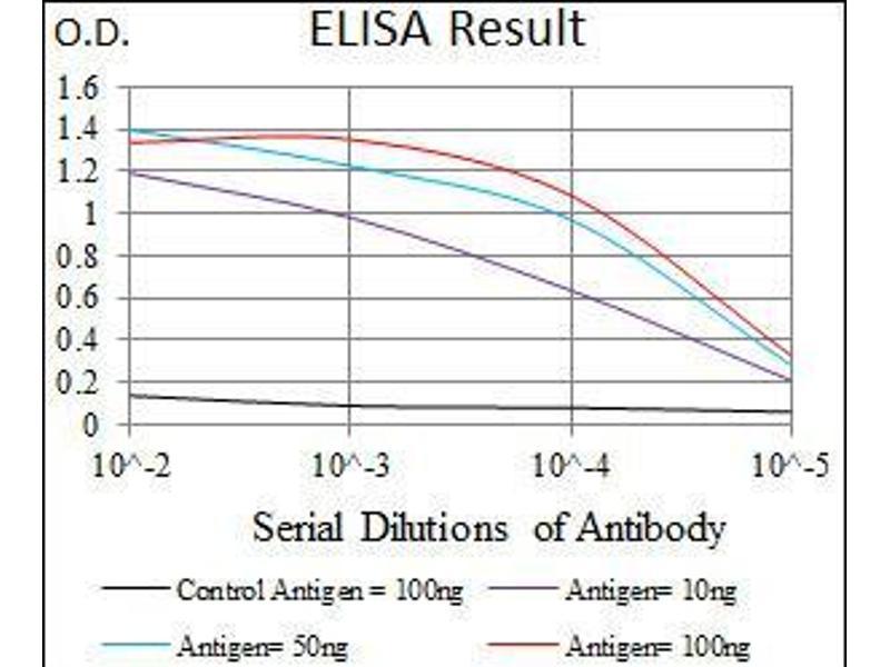 ELISA image for anti-Matrix Metalloproteinase 2 (MMP2) (AA 242-396) antibody (ABIN1098146)