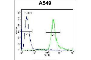 Image no. 1 for anti-Leucine Rich Repeat Containing 6 (LRRC6) (AA 179-207) antibody (ABIN5536505)