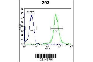 Image no. 1 for anti-WD Repeat Domain 48 (WDR48) (AA 603-630), (C-Term) antibody (ABIN654462)