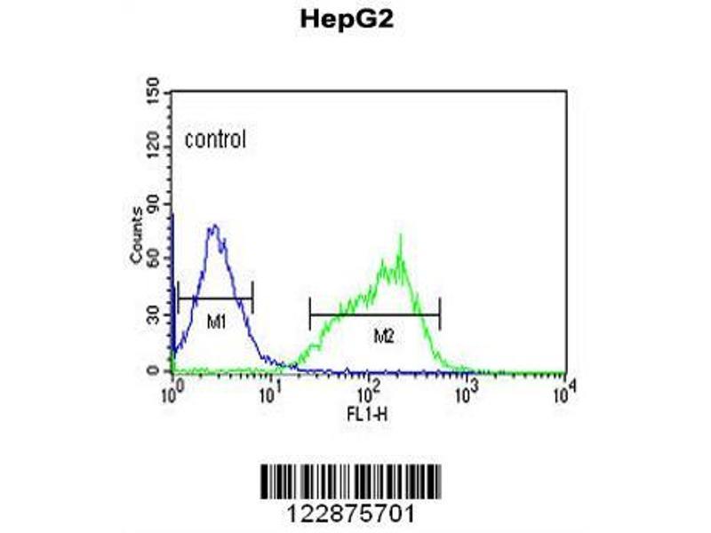 Flow Cytometry (FACS) image for anti-Glutaminase (GLS) (AA 516-545), (C-Term) antibody (ABIN652757)