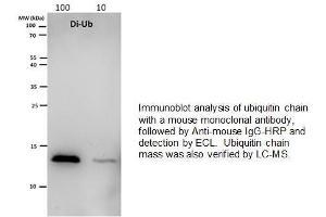 Image no. 1 for Ubiquitin (Ubiquitin) (Dimer), (Lys48 linkage) protein (ABIN1686216)