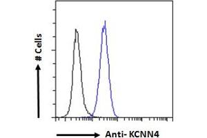 Image no. 4 for anti-Potassium Intermediate/small Conductance Calcium-Activated Channel, Subfamily N, Member 4 (KCNN4) (Internal Region) antibody (ABIN6391378)