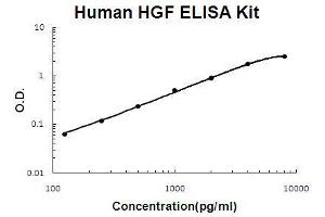Image no. 1 for Hepatocyte Growth Factor (Hepapoietin A, Scatter Factor) (HGF) ELISA Kit (ABIN411278)