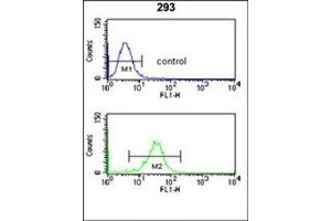 Image no. 1 for anti-Nucleoporin 153kDa (NUP153) (AA 65-94), (N-Term) antibody (ABIN953790)