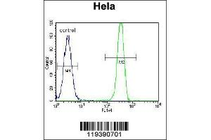 Flow Cytometry (FACS) image for anti-MSH2 (AA 637-665), (Center) antibody (ABIN655517)