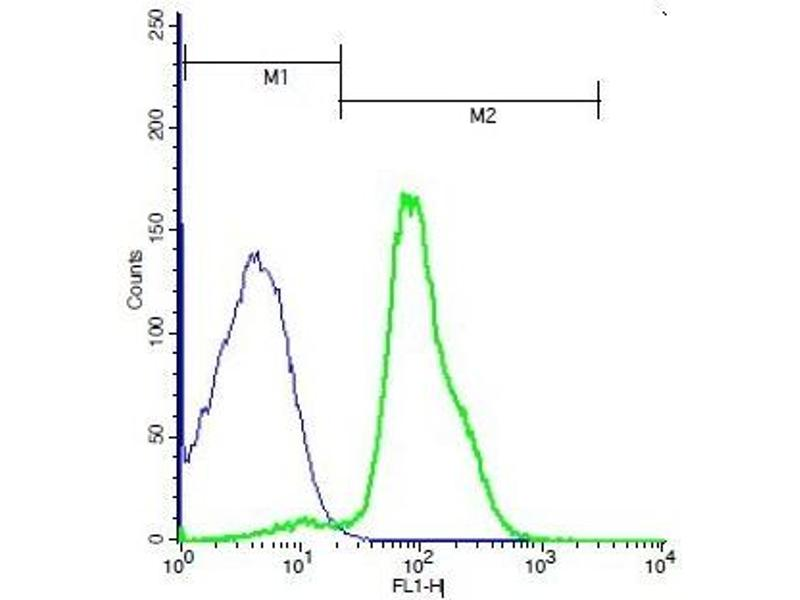Flow Cytometry (FACS) image for anti-FZD6 antibody (Frizzled Family Receptor 6) (AA 19-50) (ABIN1713791)