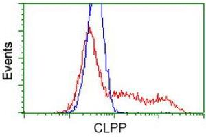 Image no. 4 for anti-ClpP Caseinolytic Peptidase, ATP-Dependent, Proteolytic Subunit Homolog (E. Coli) (CLPP) antibody (ABIN1497535)