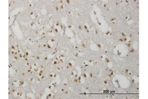 Image no. 1 for anti-G Protein-Coupled Receptor 135 (GPR135) (AA 391-493) antibody (ABIN2565570)