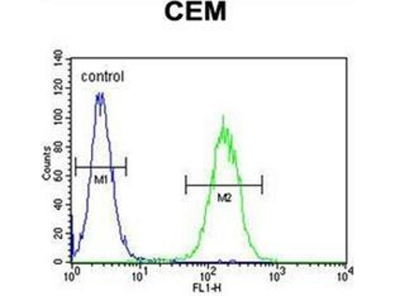 Flow Cytometry (FACS) image for anti-Cytochrome P450, Family 11, Subfamily B, Polypeptide 2 (CYP11B2) (AA 127-155), (Middle Region) antibody (ABIN951773)