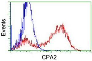 Image no. 3 for anti-Carboxypeptidase A2 (Pancreatic) (CPA2) antibody (ABIN1497595)