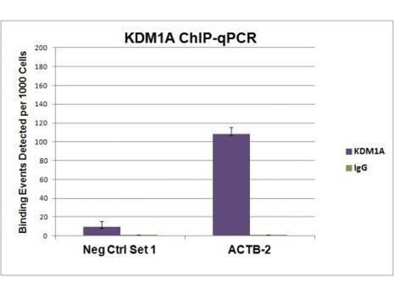 Chromatin Immunoprecipitation (ChIP) image for anti-Lysine (K)-Specific Demethylase 1A (KDM1A) antibody (ABIN2668255)