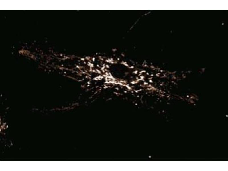 Immunofluorescence (IF) image for anti-RANBP1 antibody (RAN Binding Protein 1) (AA 28-163) (ABIN968158)