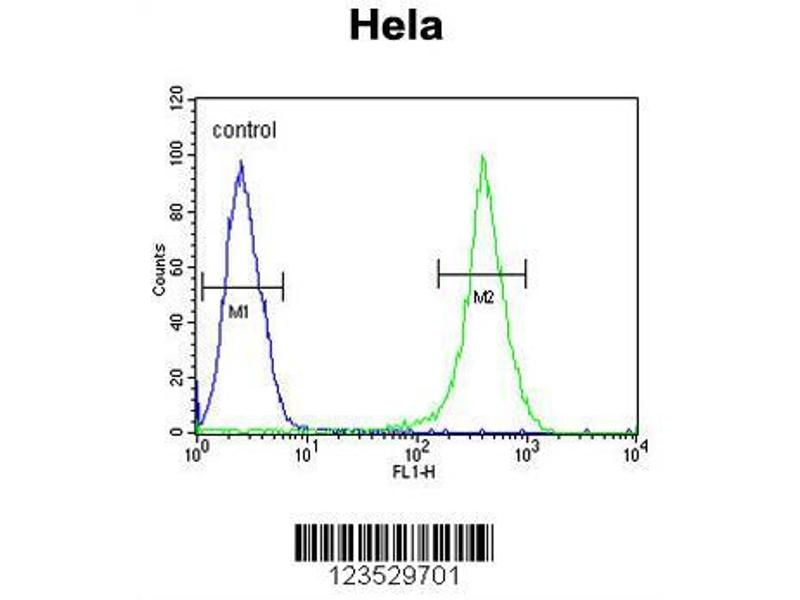 Flow Cytometry (FACS) image for anti-ASPSCR1 antibody (Alveolar Soft Part Sarcoma Chromosome Region, Candidate 1) (AA 392-418) (ABIN652768)