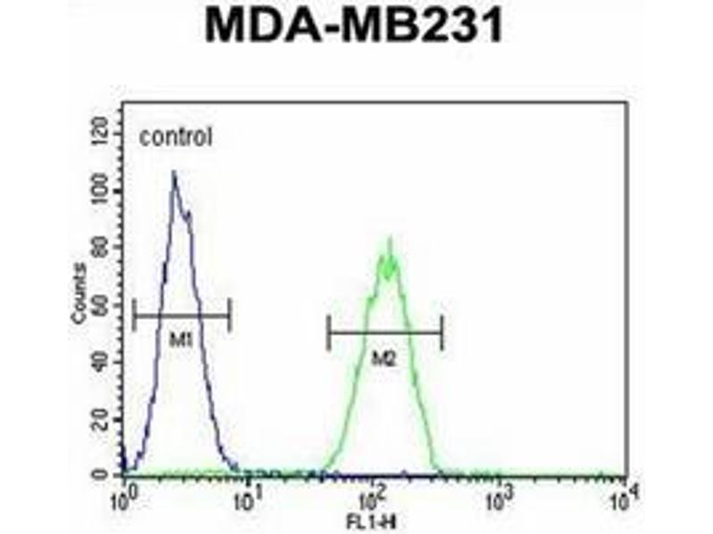 Flow Cytometry (FACS) image for anti-Oxytocin (OXT) (AA 19-48), (Middle Region) antibody (ABIN953964)