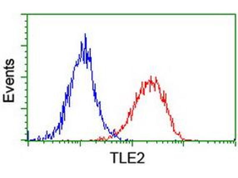 image for anti-Transducin-Like Enhancer of Split 2 (E(sp1) Homolog, Drosophila) (TLE2) antibody (ABIN1501408)