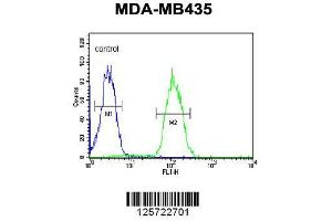Image no. 1 for anti-Dehydrogenase/reductase (SDR Family) Member 7 (DHRS7) (AA 66-93), (N-Term) antibody (ABIN650968)