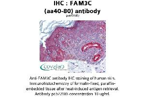 Image no. 1 for anti-Family with Sequence Similarity 3, Member C (FAM3C) (AA 40-80) antibody (ABIN1734248)