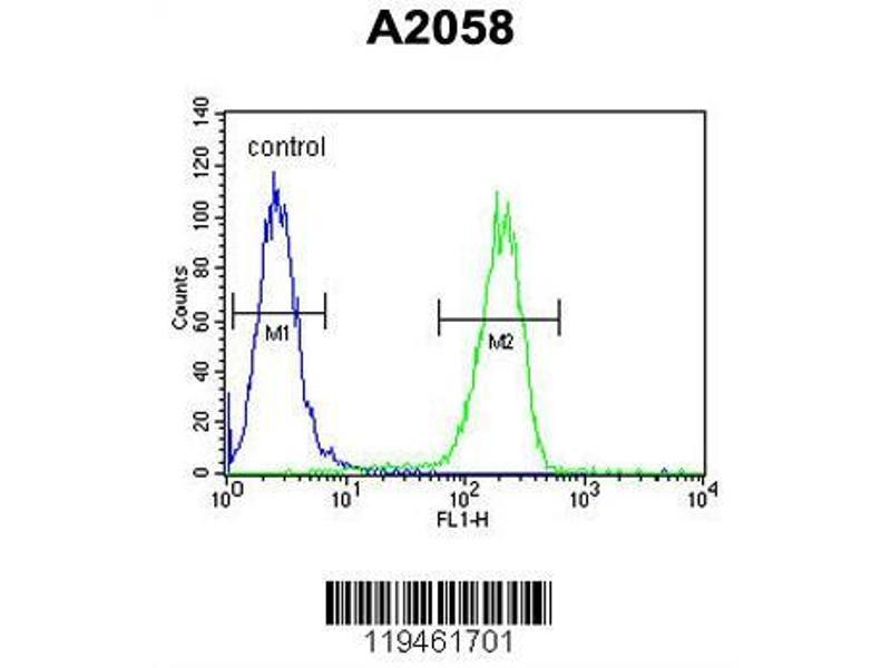 Flow Cytometry (FACS) image for anti-Annexin A5 (ANXA5) (AA 1-30), (N-Term) antibody (ABIN390501)