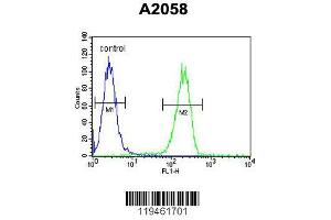 Flow Cytometry (FACS) image for anti-Annexin A5 (ANXA5) (AA 1-30), (N-Term) antibody (ABIN390501)