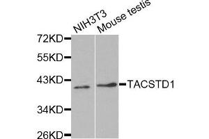 Image no. 3 for anti-Epithelial Cell Adhesion Molecule (EPCAM) antibody (ABIN3021638)