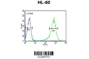 Flow Cytometry (FACS) image for anti-Regulator of G-Protein Signaling 1 (RGS1) (AA 19-45), (N-Term) antibody (ABIN652704)