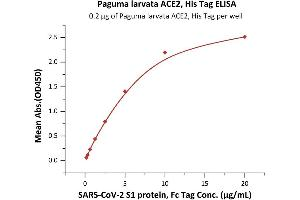Image no. 3 for Angiotensin I Converting Enzyme 2 (ACE2) protein (His tag) (ABIN6952704)