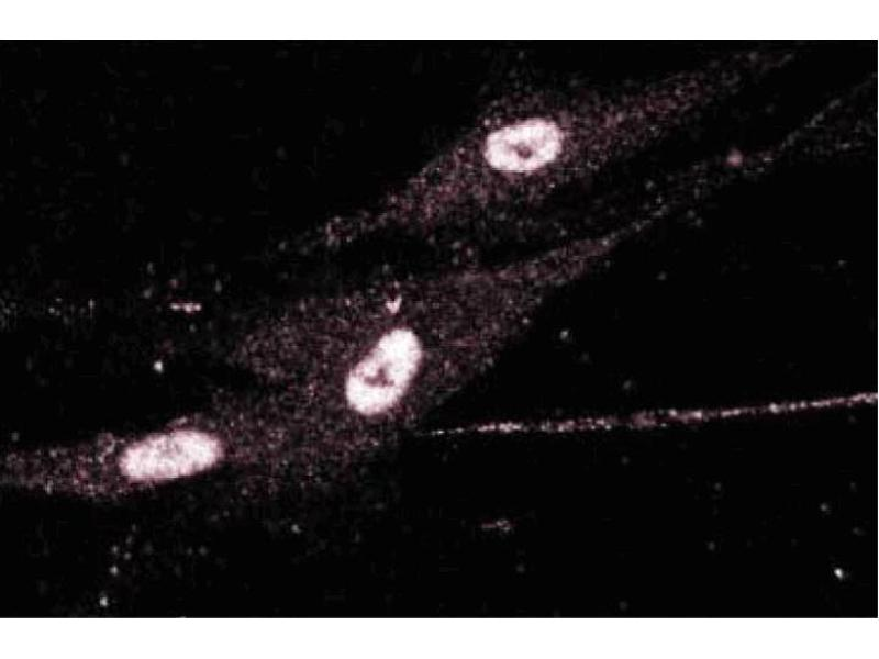 image for anti-Chloride Channel, Nucleotide-Sensitive, 1A (CLNS1A) (AA 92-201) antibody (ABIN968447)