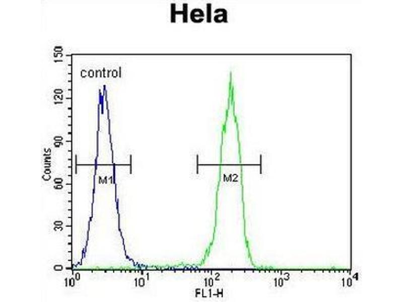 Flow Cytometry (FACS) image for anti-Cyclin G1 antibody (CCNG1) (C-Term) (ABIN951758)