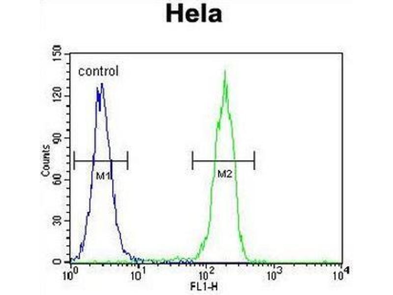 Flow Cytometry (FACS) image for anti-Cyclin G1 (CCNG1) (AA 249-280), (C-Term) antibody (ABIN951758)