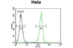 Flow Cytometry (FACS) image for anti-Cyclin G1 (CCNG1) (AA 249-280), (C-Term) antibody (ABIN951758)
