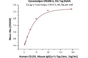 Image no. 2 for CD226 (CD226) (AA 19-252) (Active) protein (His tag) (ABIN6388274)
