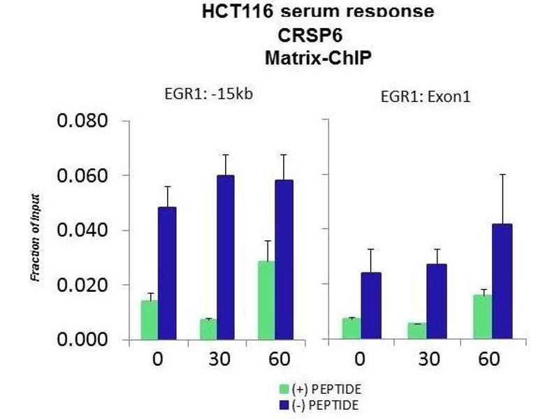 Chromatin Immunoprecipitation (ChiP) image for anti-Mediator Complex Subunit 17 (MED17) (N-Term) antibody (ABIN182953)
