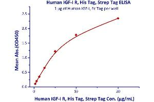 Image no. 3 for Insulin-Like Growth Factor 1 Receptor (IGF1R) (AA 31-932) (Active) protein (His tag) (ABIN2181260)