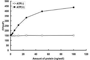 Image no. 2 for Polo-Like Kinase 2 (PLK2) (AA 1-685) protein (GST tag) (ABIN5569720)