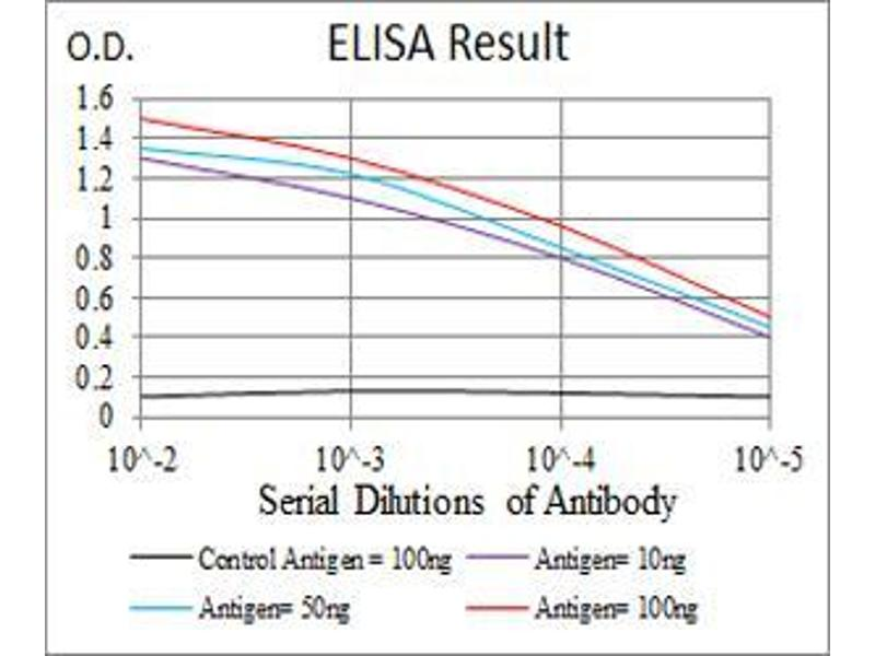 ELISA image for anti-Caspase 3, Apoptosis-Related Cysteine Peptidase (CASP3) (AA 29-175) antibody (ABIN5542609)