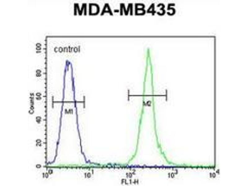 Flow Cytometry (FACS) image for anti-Mitochondrial RRNA Methyltransferase 1 Homolog (S. Cerevisiae) (MRM1) (AA 87-117), (N-Term) antibody (ABIN953500)