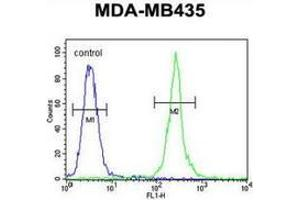 anti-Mitochondrial RRNA Methyltransferase 1 Homolog (S. Cerevisiae) (MRM1) (AA 87-117), (N-Term) antibody