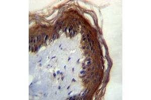 Immunohistochemistry (Paraffin-embedded Sections) (IHC (p)) image for anti-Lipase, Family Member M (LIPM) (AA 317-346), (C-Term) antibody (ABIN953185)