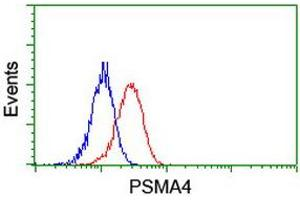 Image no. 2 for anti-Proteasome (Prosome, Macropain) Subunit, alpha Type, 4 (PSMA4) antibody (ABIN1500456)