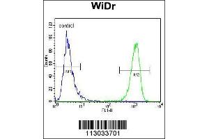 Image no. 3 for anti-Mucin 20, Cell Surface Associated (MUC20) (C-Term) antibody (ABIN2446339)